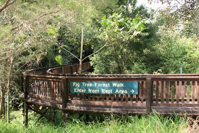 Kenilworth Figtree Forest Walk